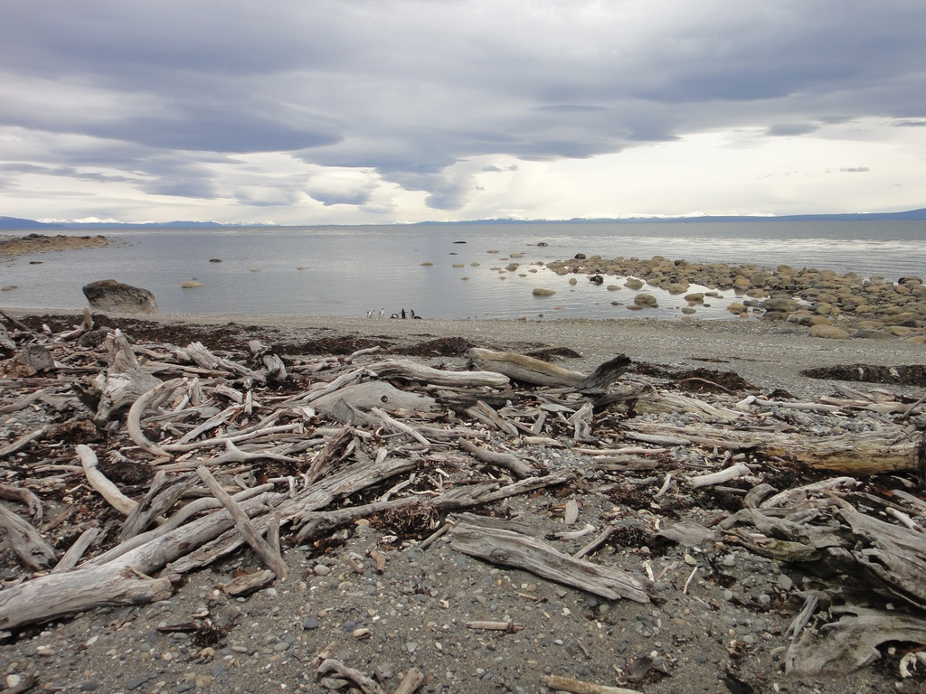 punta arenas asian singles Best things to do in chilean patagonia punta arenas, you can journey to cruising through tierra del fuego's remote straits on a quest for asian spices.
