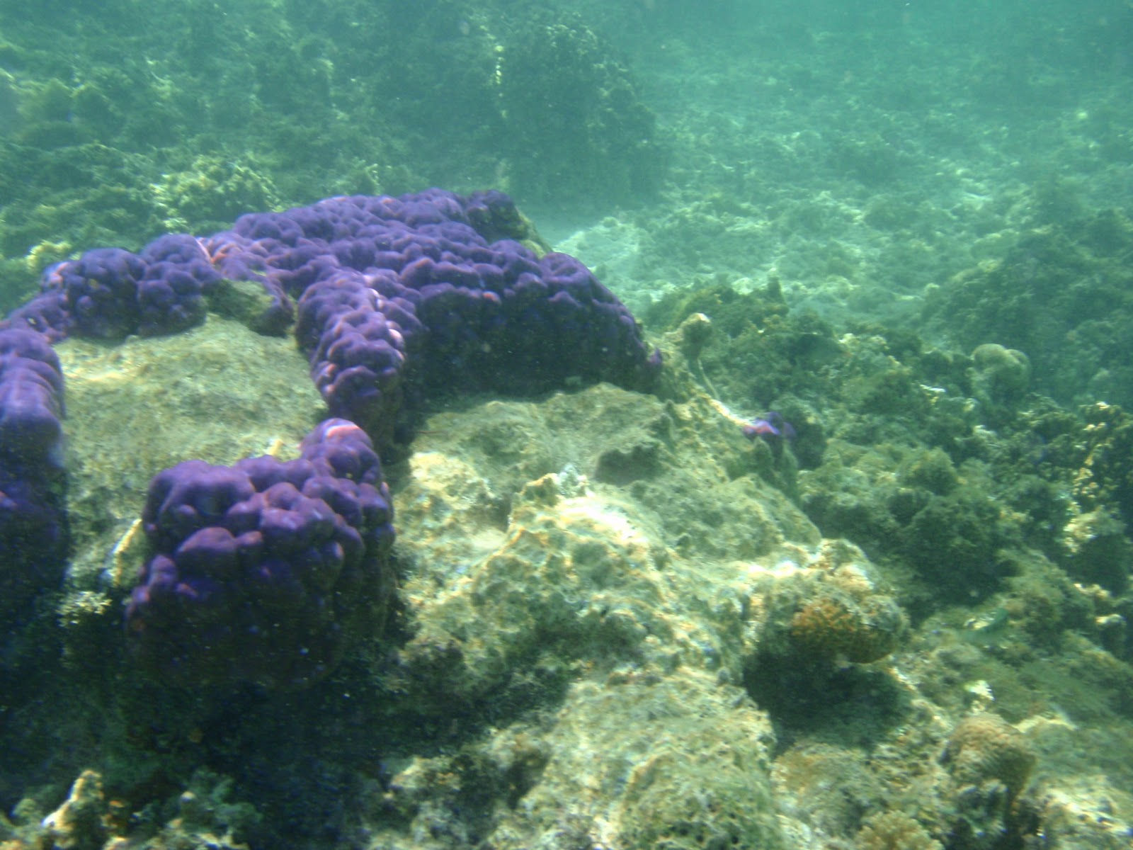 Beyond island hopping the coral reef plural for Plural of fish