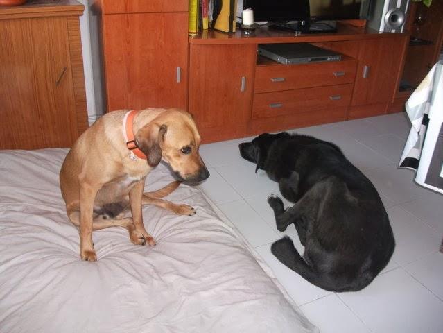 cuidador de mascotas madrid