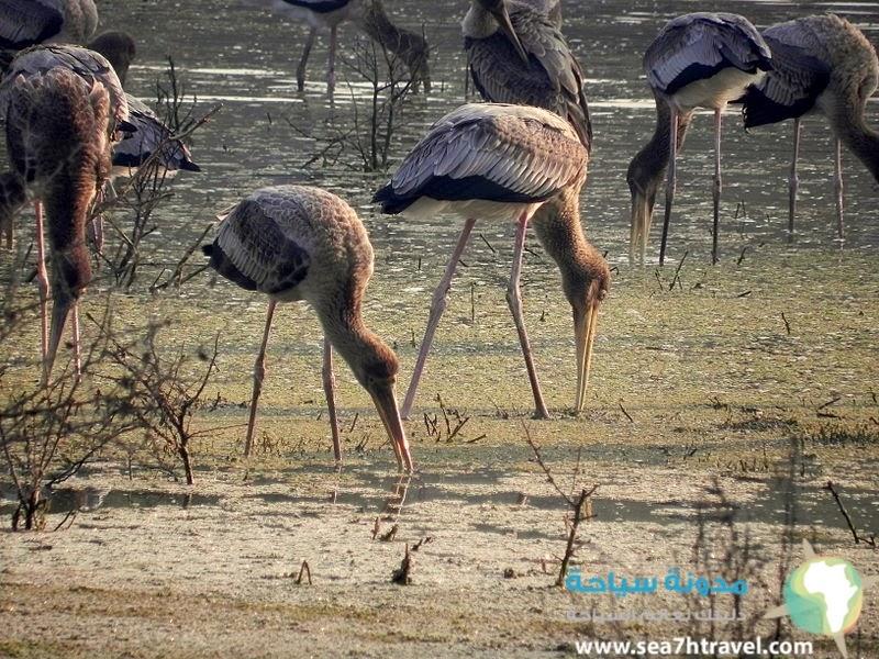 حديقة كيولاديو الوطنية في الهند