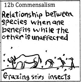 Commensalistic relationships between species benefit one member but