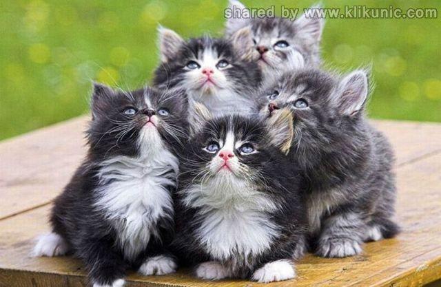 http://2.bp.blogspot.com/-fveN8gs0Ugc/TXhN2raJyLI/AAAAAAAAQjo/-aiXV5oY3Eg/s1600/these_funny_animals_635_640_09.jpg