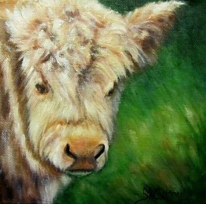 Curly, a calf portrait in oils