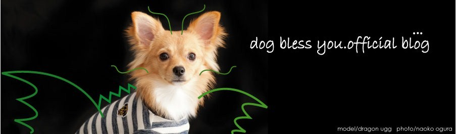 dog bless you official blog