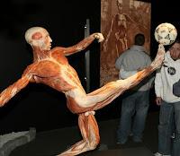 İnsan cesetlerinden düzenlenen sergi