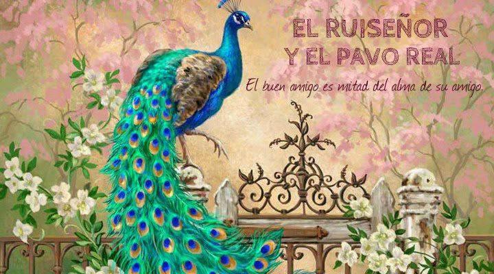Cortas historias con moraleja el ruise or y el pavo real - Fotos de un pavo real ...