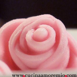 rosa rosa di rosa