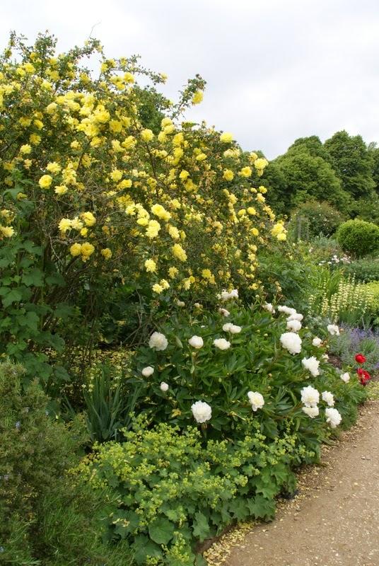 Organic Garden Dreams: Mottisfont Abbey - a Rose Lover\'s Paradise III