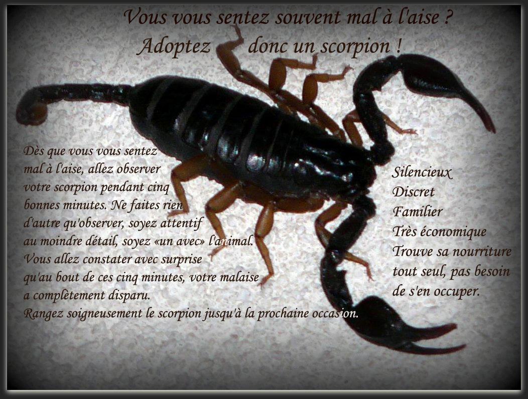 """Résultat de recherche d'images pour """"le maitre spirituel et le scorpion"""""""