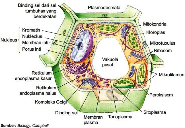 gambar 1 struktur sel eukariotik pada tumbuhan 1 membran sel