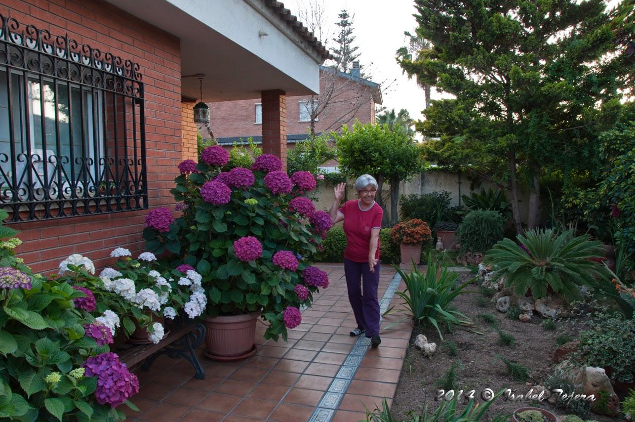 La magia de mi jardin las bebedoras de agua - Cuando podar hortensias ...