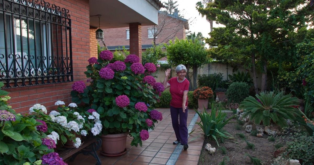 La magia de mi jardin las bebedoras de agua - Cuando podar las hortensias ...