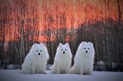 Snowpepper's