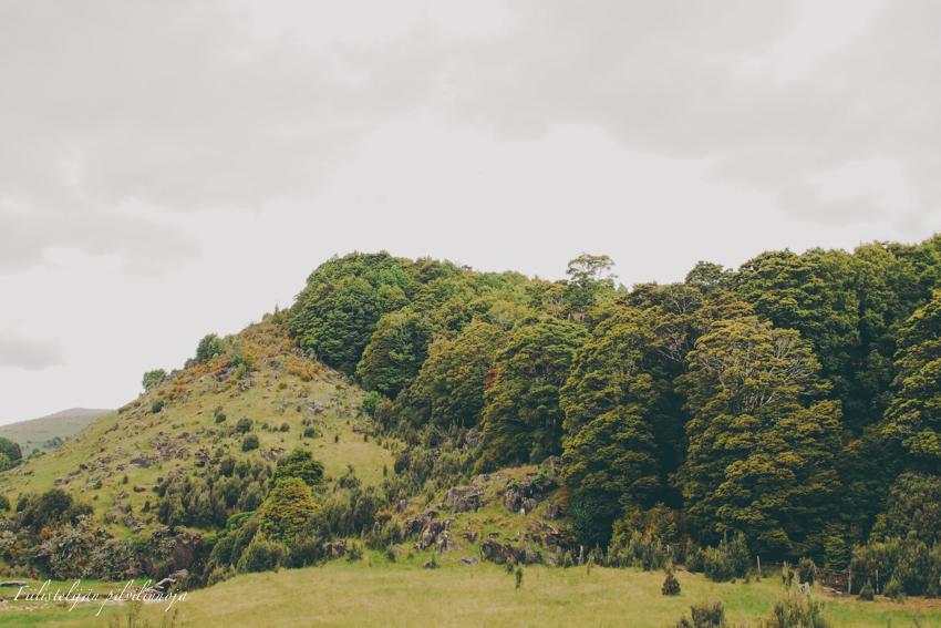 Uusi-Seelanti