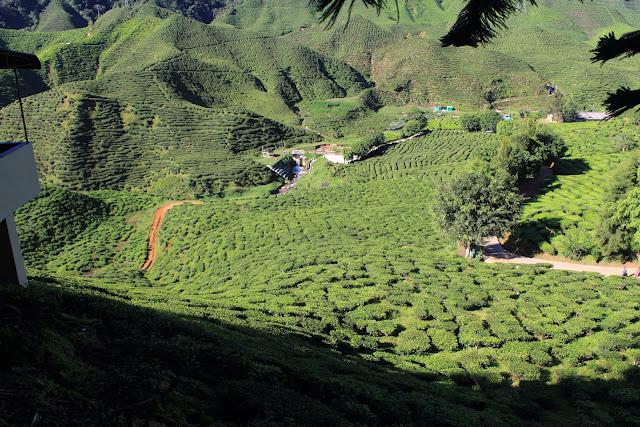 Bharat Plantation
