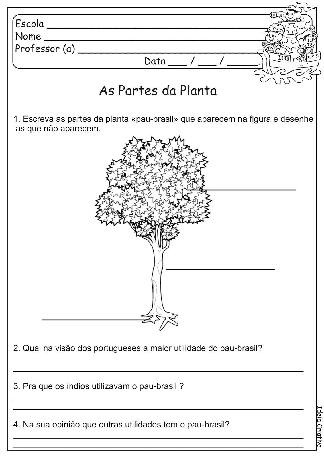 Atividade Descobrimento do Brasil Partes da Planta