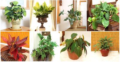 Xananatura plantas purificadoras del aire i - Plantas de interior purificadoras del aire del hogar ...