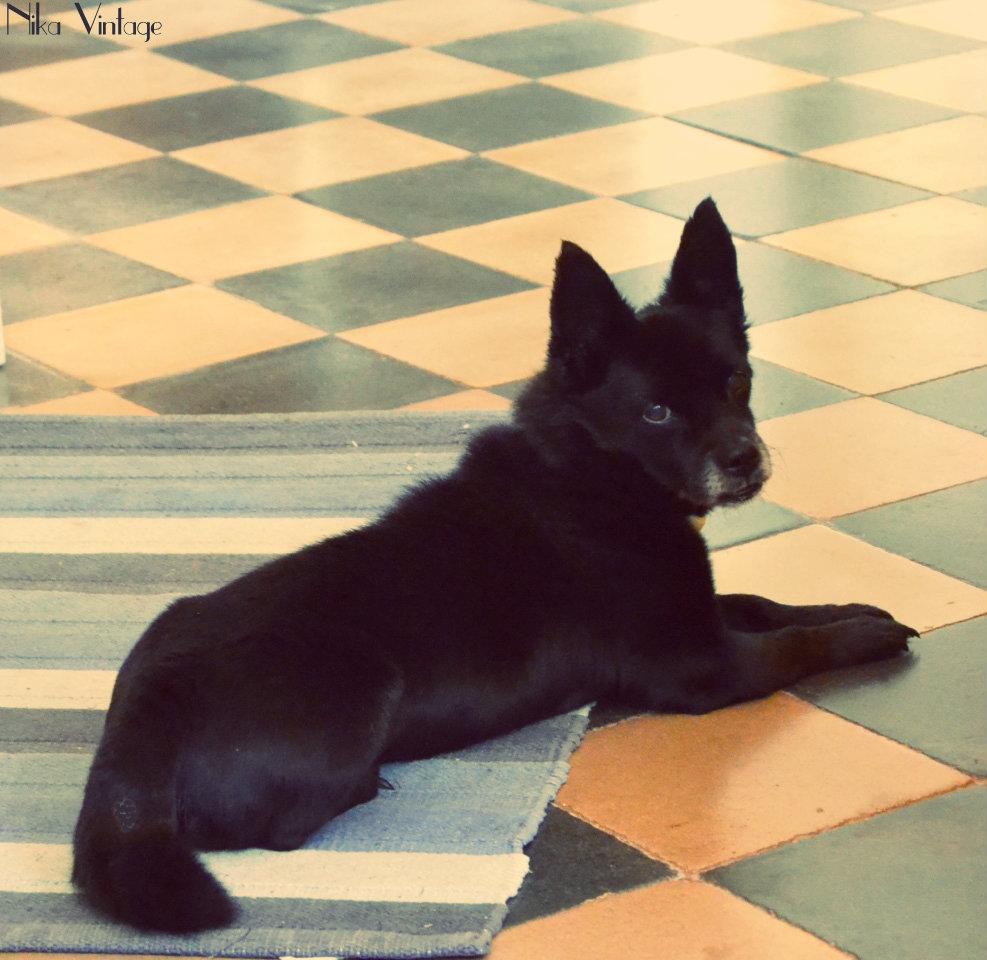 perros, fotografia, perro, mascota, quedada, hoy compartimos, Bajoz, Brillol