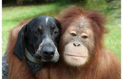 gambar-gambar binatang, binatang lucu, gambar binatang lucu, gambar hewan lucu,gambar-gambar lucu binatang, gambar-gambar binatang lucu,gambar hewan lucu, gambar binatang lucu, gambar hewan yang lucu, gambar binatang yang lucu, gambar-gambar hewan lucu,