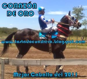 EL CABALLO DEL AÑO 2011