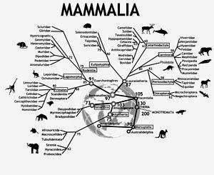 Kelas Hewan Mamalia Ciri Umum Dan Cara Reproduksinya Hewan
