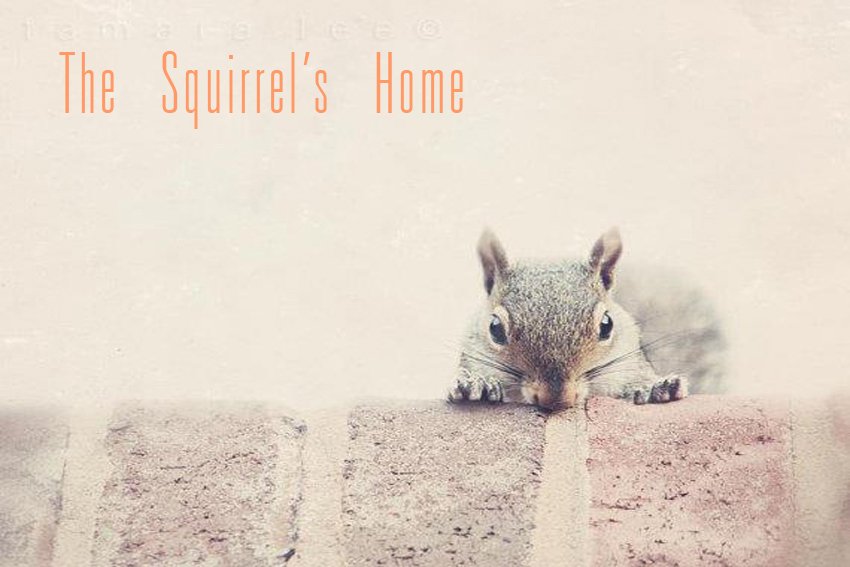 The Squirrel's Home