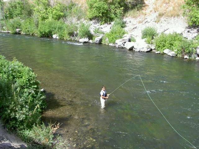 Fisheries and aquatics program rio grande cutthroat trout for Gila river fishing