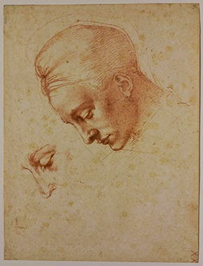 Sketch by Michelangelo showing the face of a young person in profile.