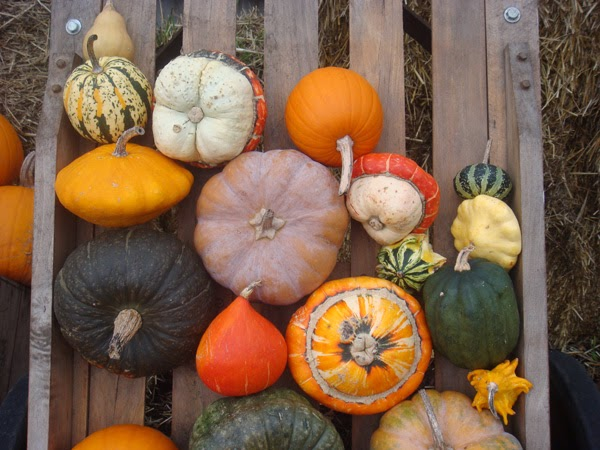 Homebuildlife pumpkin parade at kew gardens - Botanic gardens pumpkin festival ...