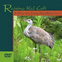 Raising Kid Colt