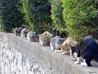FS Kucing Jawa Sehat Jinak Total, kucing persia depok,  kucing persia diare,  kucing persia diberi makan nasi,  kucing persia di luar rumah,  kucing persia diberi makan ikan,  kucing persia di medan,  kucing persia di surabaya,  kucing persia d jual,  kucing persia exo,  kucing persia exotic,  kucing persia exotic shorthair,  kucing persia eksotik,  kucing persia eksotis,  kucing persia ekor pendek,  kucing persia exotic bandung,  kucing persia exotik,  kucing persia extrim,  kucing persia extrem,  vitamin e untuk kucing persia,  kucing persia flat nose long hair,  kucing persia flat face untuk dijual,