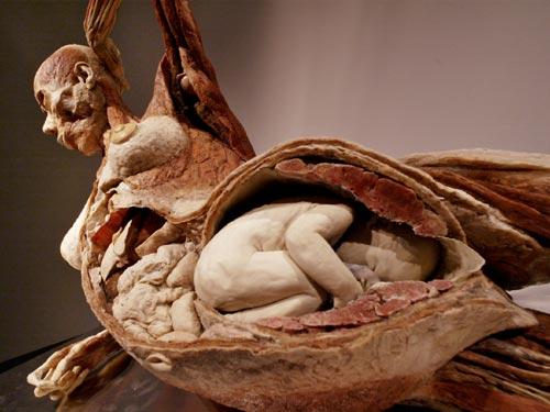El ser Humano y Su Anatomia De Forma Mas Profunda
