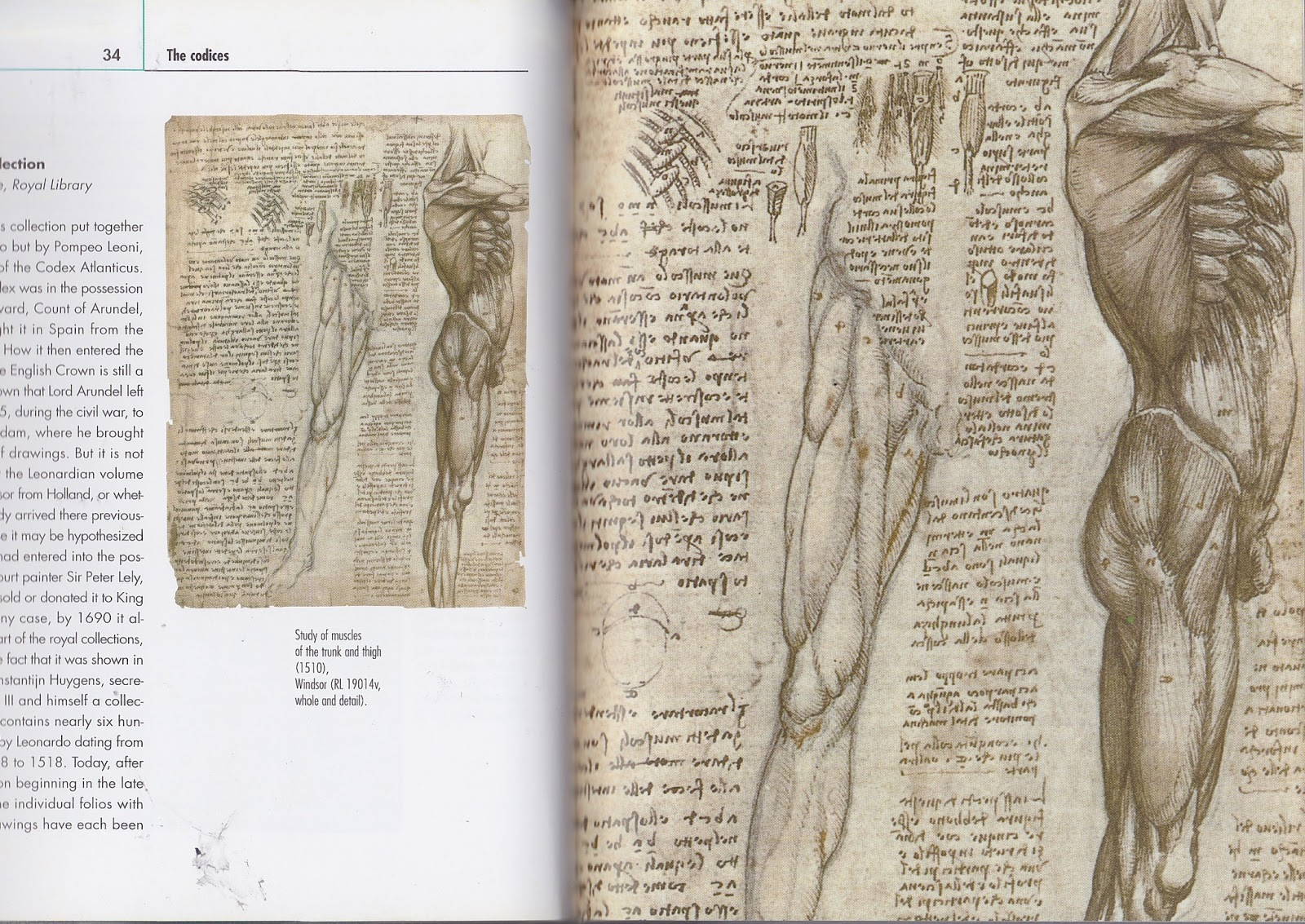 Anatomy And Da Vinci Scanned In Images From Borrowed Books Jazz
