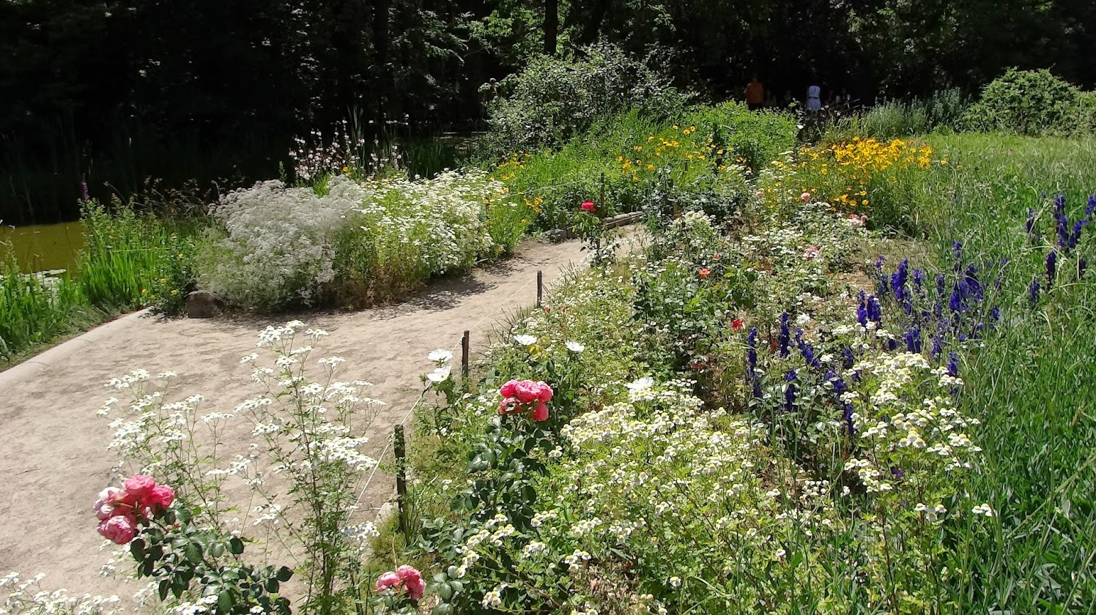 Jacques huber and the amazonian botany jardin des plantes for Jardin des plantes de montpellier