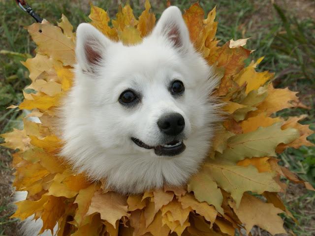 Autumn Animal Images