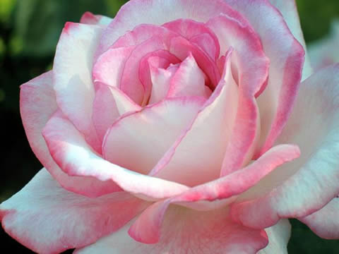 Un blog muy especial para todos im genes de flores bonitas - Fotos flores bellas ...