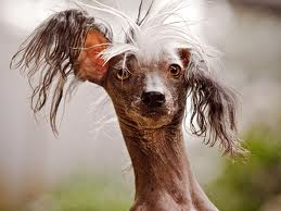 How To Get My Dog To Regrow Hair
