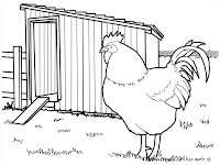 Mewarnai Gambar Ayam Jago Didekat Kandang