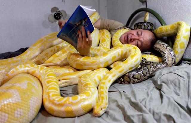 O proprietário de Zoológico Emmanuel Tangco dorme com suas cobras