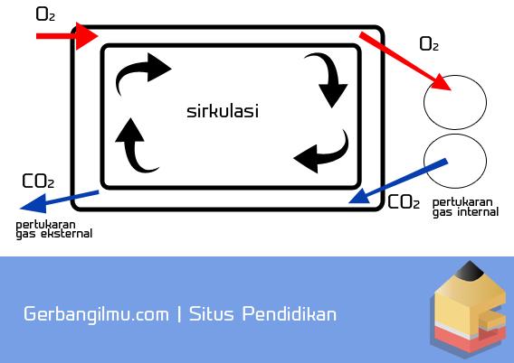 Gambar Siklus pertukaran gas internal dan eksternal.