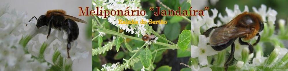 http://meliponariojandaira.blogspot.com/