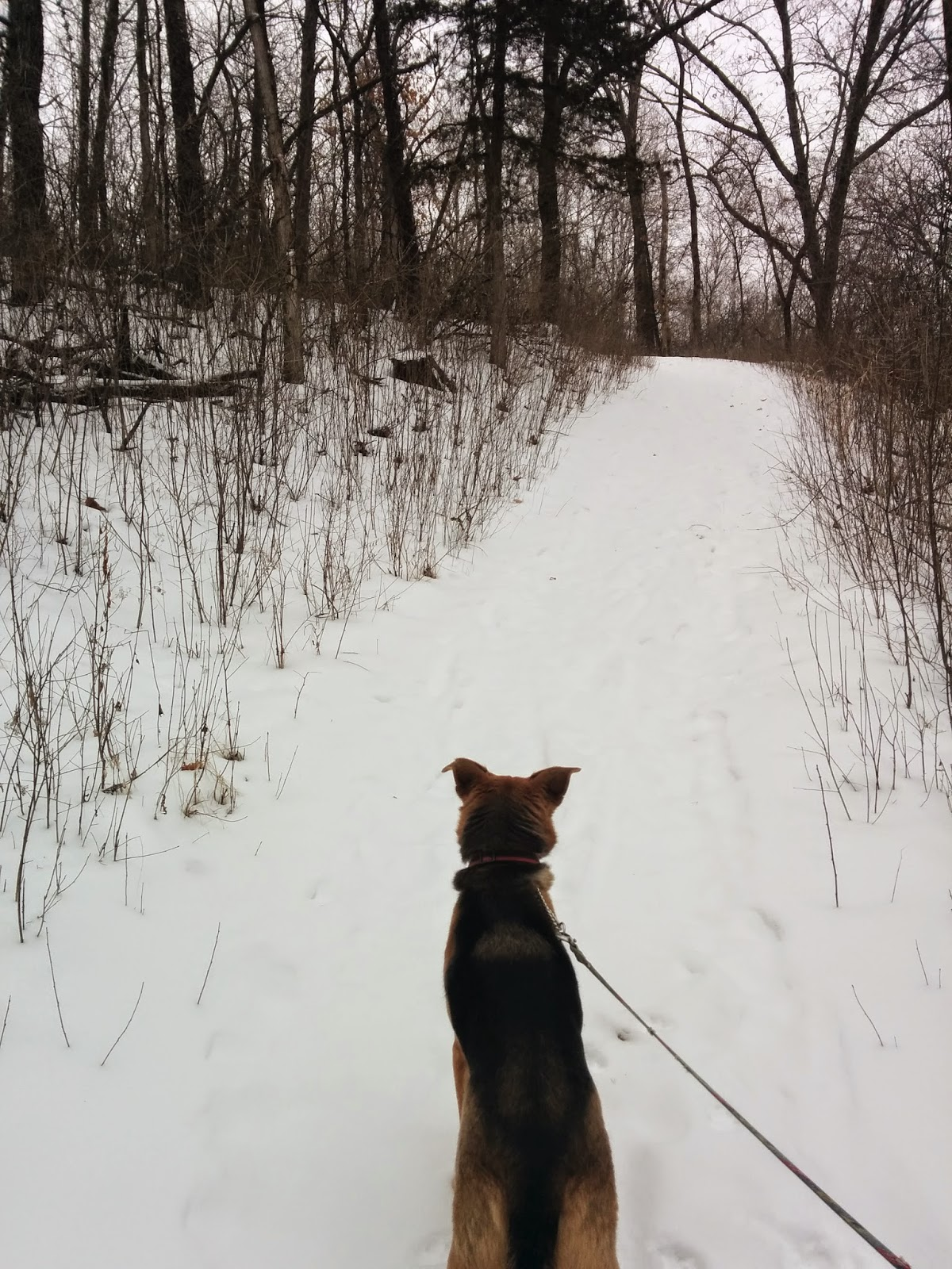 Winter Hiking, Afton State Park, MN