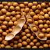 Klasifikasi dan Morfologi Tanaman Kacang Kedelai  (Glycine max L. )