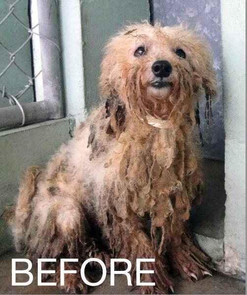 Dog Rescue In Vicksburg