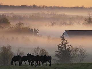 Fog Horses