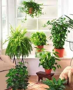 Oficina publica saludable las plantas de interior ayudan - Plantas de interior que purifican el aire ...