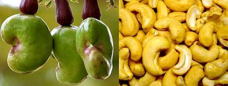 Khasiat Kacang Mete Untuk Kesehatan Ibu Hamil