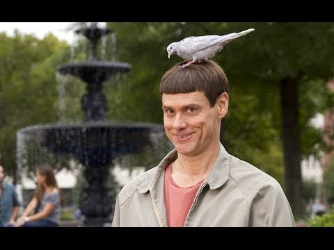 The first official trailer of dumb and dumber 2 the upcoming comedy