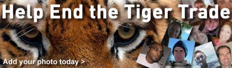 Salveaza Tigrii