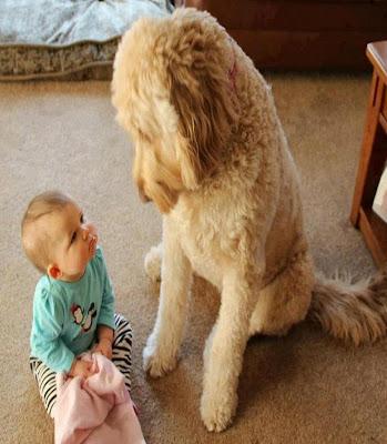 Photo d'un mignon bébé  avec son grand chien